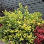Ask a Pro: Q: How do you handle yard work with regards to painting?