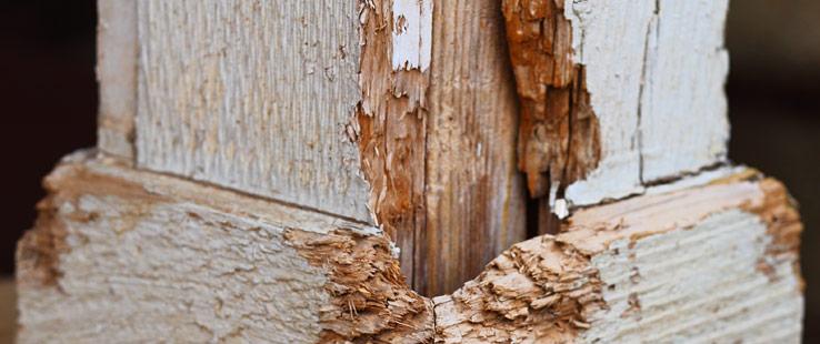 wood-repair_03-14